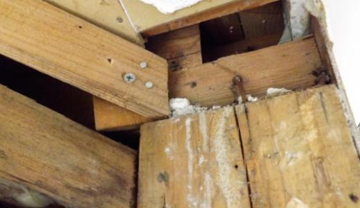 シロアリ被害で家はどうなる?全壊・倒壊のリスクや放置した結果やいかに!?