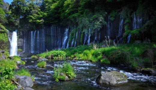静岡県でおすすめのシロアリ予防・駆除業者は?施工費用の見積もり相場や組み合わせまとめ